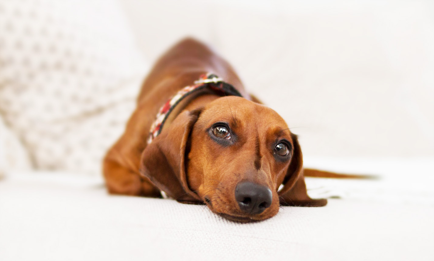 Dog owners can now be FINED