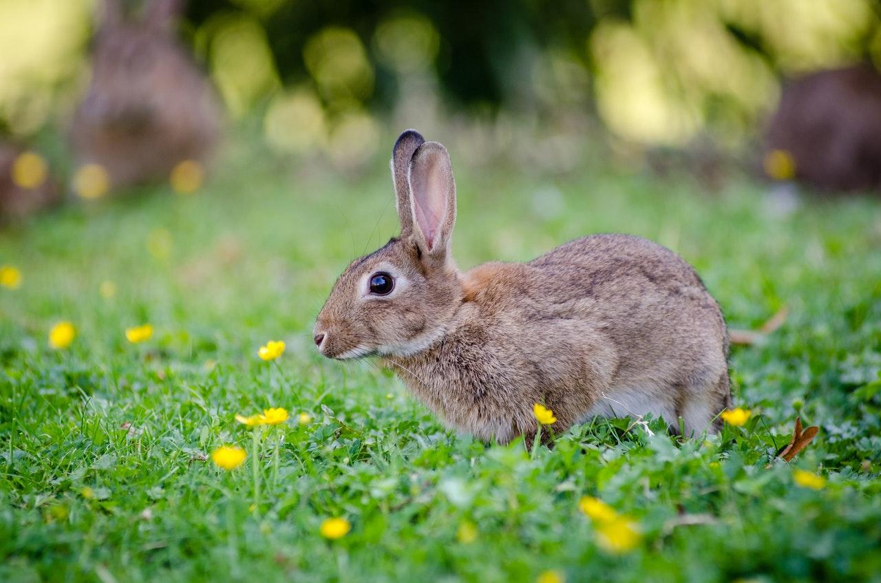Keeping of Rabbits